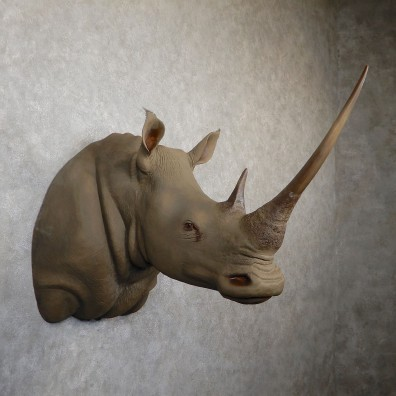 White Rhinoceros Replica Shoulder Mount For Sale #19346 @ The Taxidermy Store