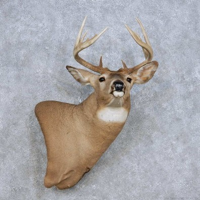Whitetail Deer Wall Pedestal Mount For Sale #14104 @ The Taxidermy Store