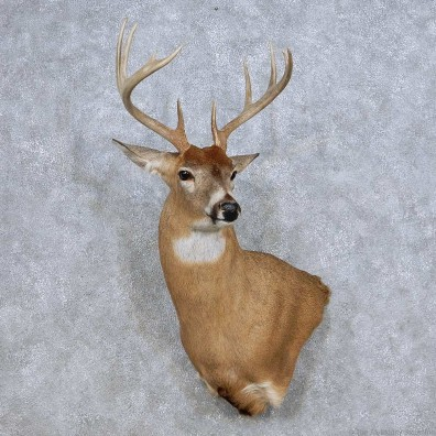 Whitetail Deer Taxidermy Shoulder Mount For Sale #14085 @ The Taxidermy Store