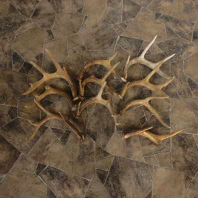 Whitetail Deer Antler Craft Pack For Sale #21329 @ The Taxidermy Store