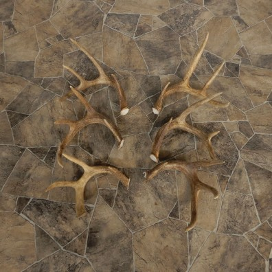 Whitetail Deer Antler Craft Pack For Sale #21333 @ The Taxidermy Store