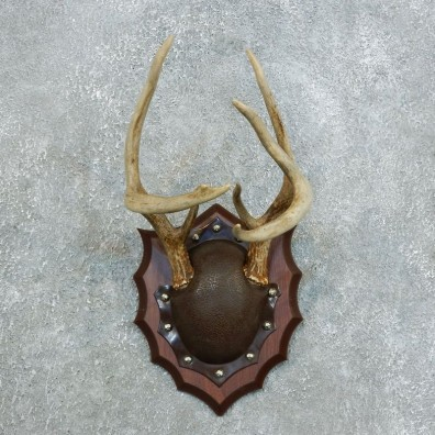 Whitetail Deer Antler Plaque Mount For Sale #18406 @ The Taxidermy Store