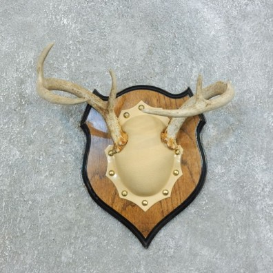 Whitetail Deer Antler Plaque Mount For Sale #18443 @ The Taxidermy Store