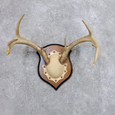 Whitetail Deer Antler Plaque Mount For Sale #18717 @ The Taxidermy Store