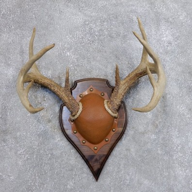 Whitetail Deer Antler Plaque Mount For Sale #18722 @ The Taxidermy Store