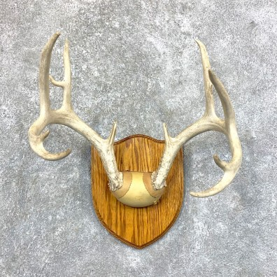 Whitetail Deer Antler Plaque Mount For Sale #23576 @ The Taxidermy Store
