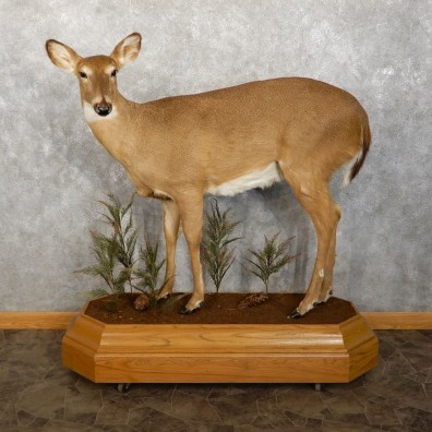 Whitetail Deer Doe Life-Size Mount For Sale #18764 @ The Taxidermy Store