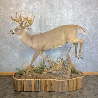 Whitetail Deer Life Size Taxidermy Mount #23538 For Sale @ The Taxidermy Store