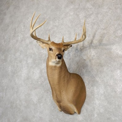 Whitetail Deer Shoulder Mount #18820 For Sale - The Taxidermy Store