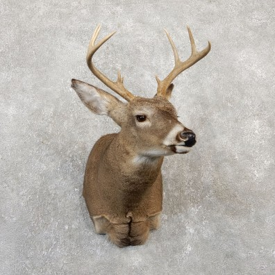 Whitetail Deer Shoulder Mount #19997 For Sale - The Taxidermy Store