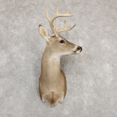 Whitetail Deer Shoulder Mount #20266 For Sale - The Taxidermy Store