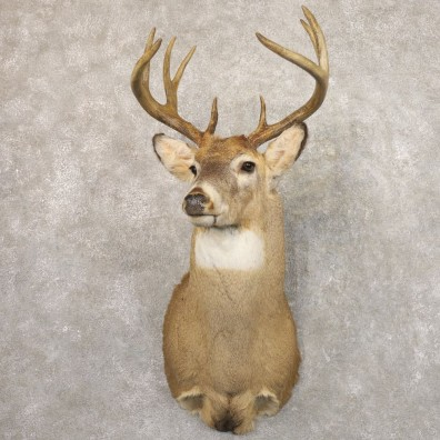 Whitetail Deer Shoulder Mount #22170 For Sale - The Taxidermy Store