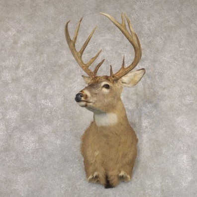 Whitetail Deer Shoulder Mount #22349 For Sale - The Taxidermy Store