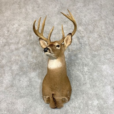 Whitetail Deer Shoulder Mount #22797 For Sale - The Taxidermy Store