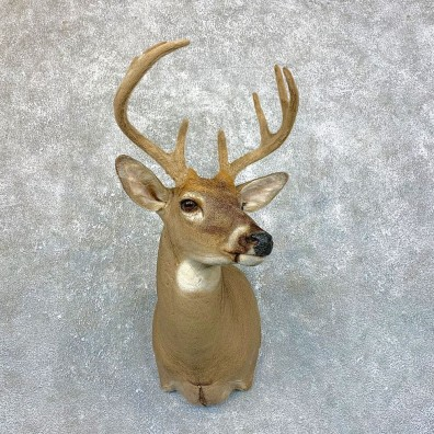 Whitetail Deer Shoulder Mount #23884 For Sale - The Taxidermy Store