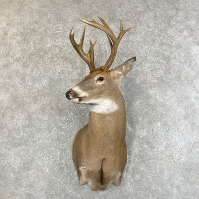 Whitetail Deer Shoulder Mount #24216 For Sale - The Taxidermy Store
