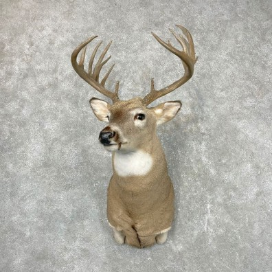 Whitetail Deer Shoulder Mount #24551 For Sale - The Taxidermy Store