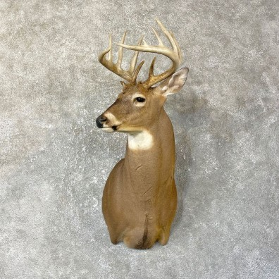 Whitetail Deer Shoulder Mount #25131 For Sale - The Taxidermy Store