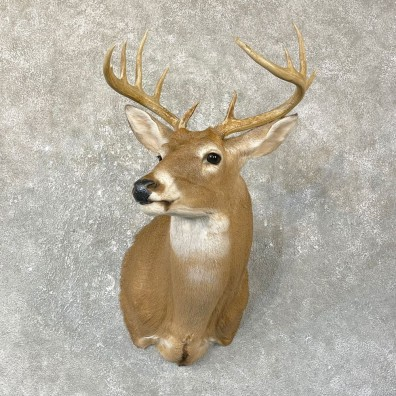 Whitetail Deer Shoulder Mount #25133 For Sale - The Taxidermy Store
