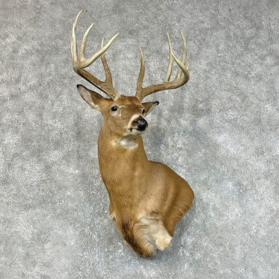 Whitetail Deer Shoulder Mount #25418 For Sale - The Taxidermy Store