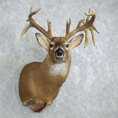 Whitetail Deer Shoulder Mount For Sale #18513 @ The Taxidermy Store