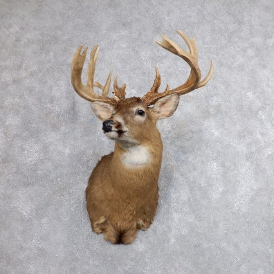 Whitetail Deer Shoulder Mount For Sale #18613 @ The Taxidermy Store