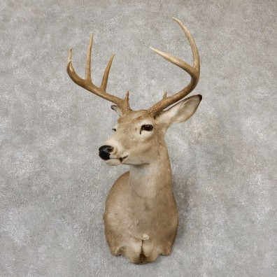 Whitetail Deer Shoulder Mount For Sale #18821 @ The Taxidermy Store