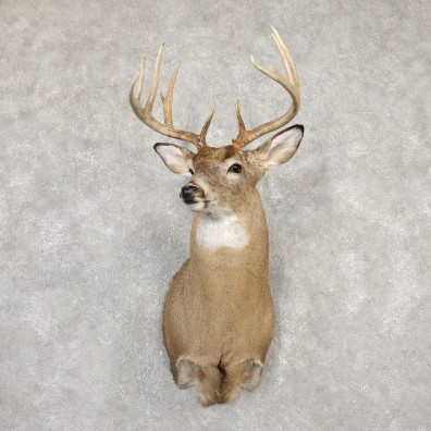 Whitetail Deer Shoulder Mount For Sale #20002 @ The Taxidermy Store