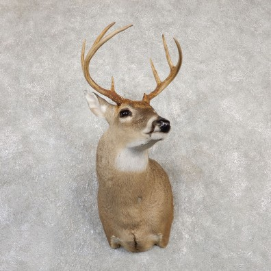 Whitetail Deer Shoulder Mount For Sale #20004 @ The Taxidermy Store