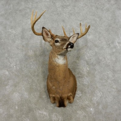 Whitetail Deer Shoulder Mount For Sale #17328 @ The Taxidermy Store
