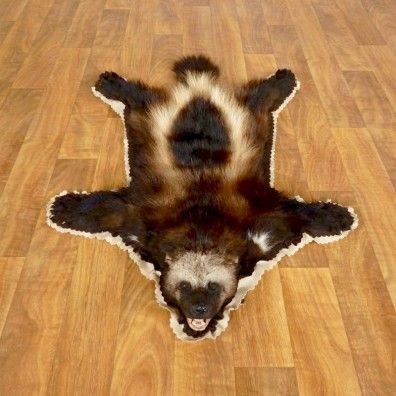 Alaskan Wolverine Rug  For Sale #17278 @ The Taxidermy Store