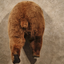Grizzly Bear Rump Mount