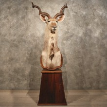 African Greater Kudu Mount #10414 - The Taxidermy Store