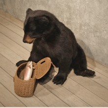 Black Bear Taxidermy Mount #10576 For Sale @ The Taxidermy Store