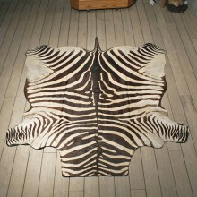 Zebra Rug Mount #10954 - The Taxidermy Store