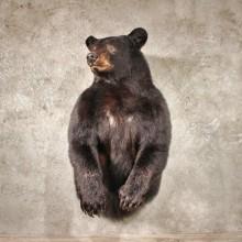 1/2 Life Size Black Bear