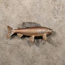 Arctic Grayling Taxidermy Fish Mount For Sale