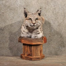 Pedestal Bobcat Mount #11125 - The Taxidermy Store
