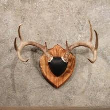 Whitetail Deer Antler Plaque