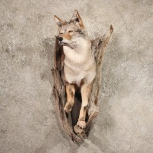 Wall Hanging Coyote