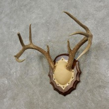 Whitetail Deer Antler Plaque Mount For Sale #17299 @ The Taxidermy Store