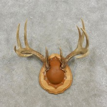 Whitetail Deer Antler Plaque Mount For Sale #17301 @ The Taxidermy Store