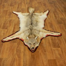 Coyote Rug Taxidermy Mount #17433 For Sale @ The Taxidermy Store