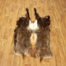 Himalayan Tahr Hide Taxidermy Rug Mount #17452 For Sale @ The Taxidermy Store