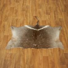 Waterbuck Hide Mount For Sale #17457 @ The Taxidermy Store