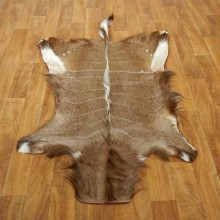 Nyala Rug Mount For Sale #17496 @ The Taxidermy Store