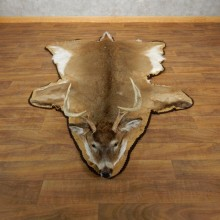 Whitetail Deer Taxidermy Rug Mount #17866 For Sale - The Taxidermy Store