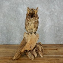 Reproduction Long-eared Owl Life Size Mount #18019 For Sale @ The Taxidermy Store