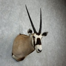 Gemsbok Oryx Shoulder Mount For Sale #18072 @ The Taxidermy Store