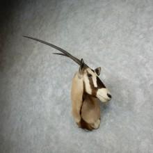 Gemsbok Oryx Shoulder Mount For Sale #18074 @ The Taxidermy Store